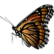 Monarch_Butterfly_by_Merlin2525.png