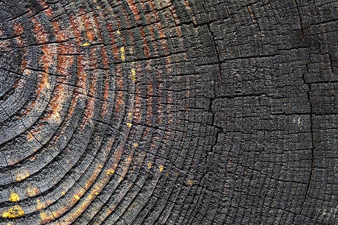 Burnt resinous wood glowing texture Sele