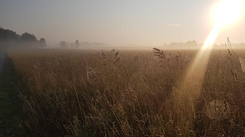 bakelab-lauren-hambleton-home-wheatfield