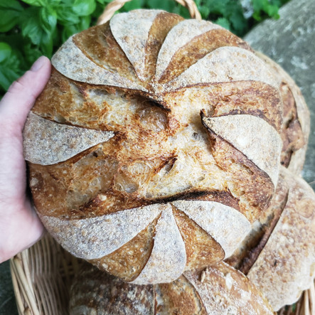 Basket Sourdough.jpg