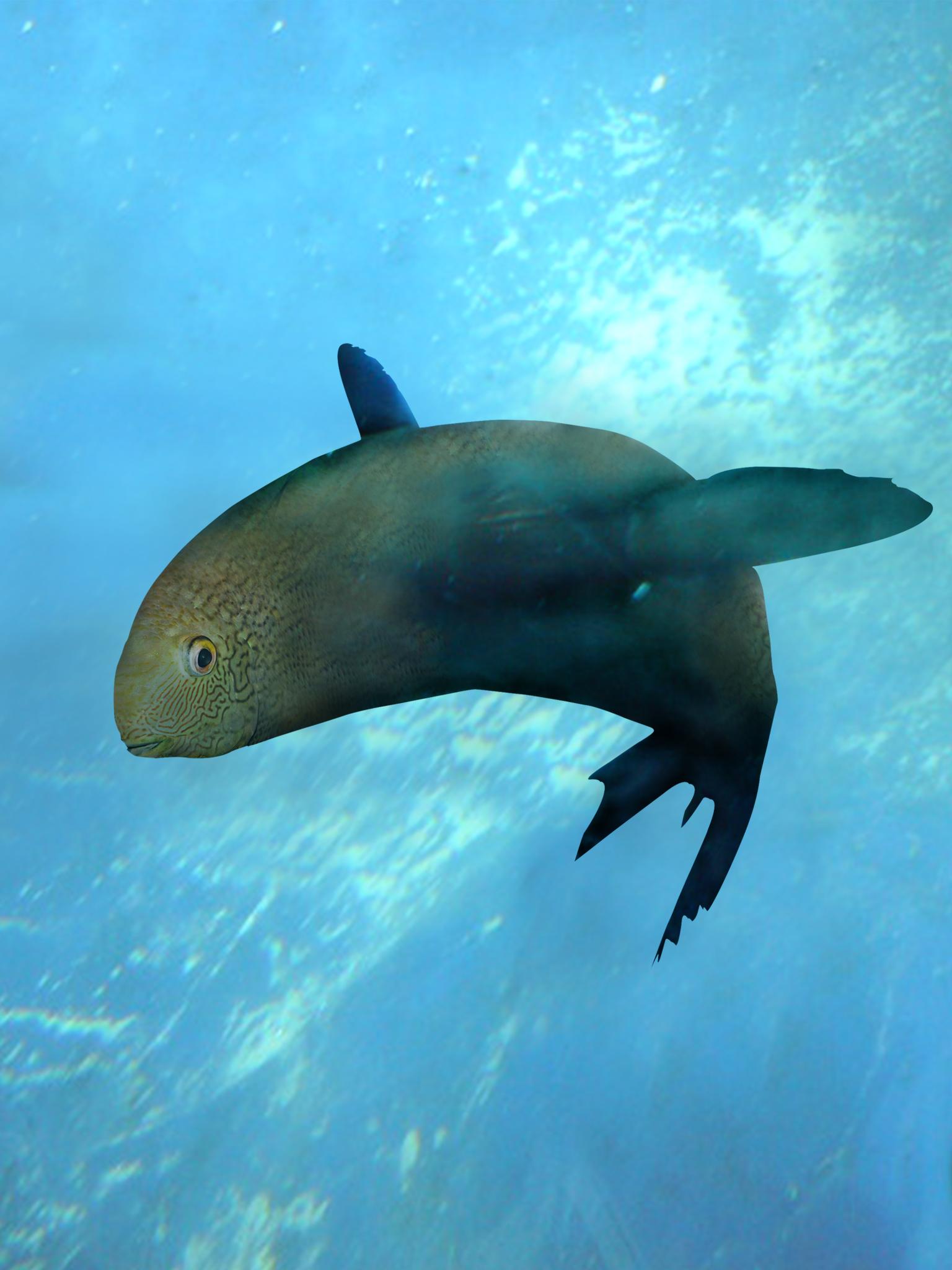 1 FishSeal in Environment