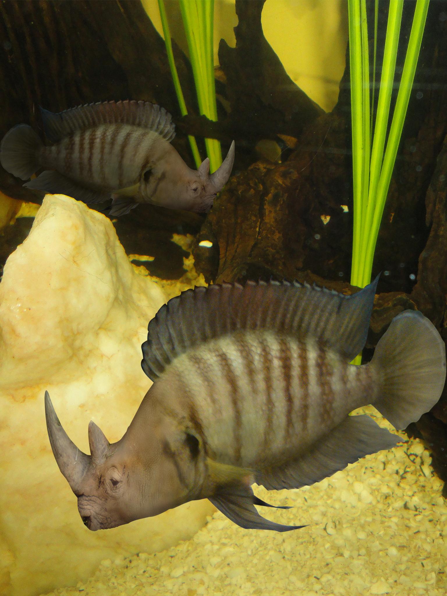 RhinoFish in Environment
