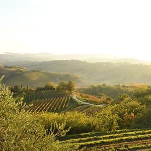 Wine with aldovino