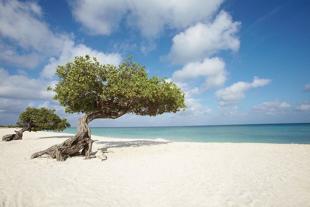 Eagle Beach em Aruba escolhida mais uma vez como uma das mais lindas praias do mundo