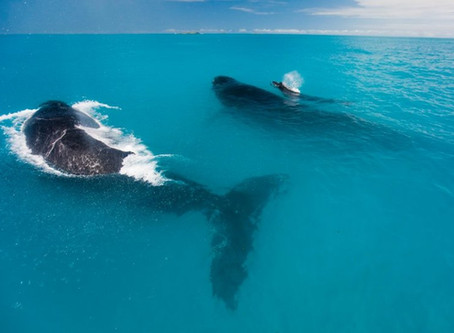 Turismo: Parque Nacional de Abrolhos reabre para visitação