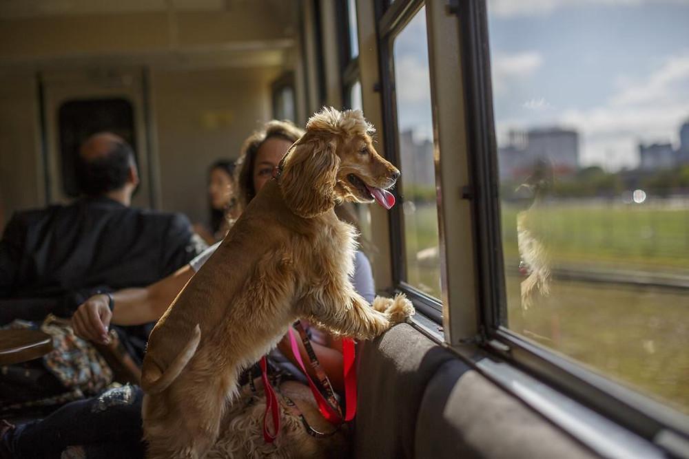 Serra Verde Express inaugura vagão pet friendly em suas viagens