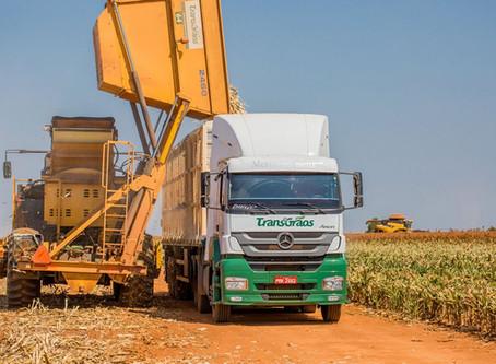 Transgrãos compra 120 caminhões Axor para transporte de milho em espiga