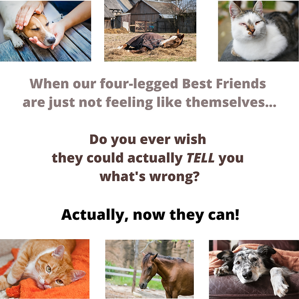 When our beloved 4-legged best friends d
