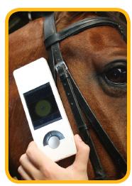 mi-health-horse.png