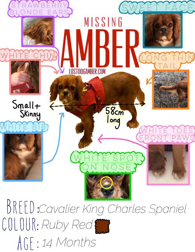 Amber identikit.JPG