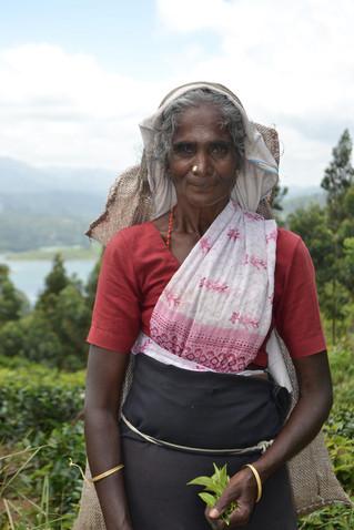 SRI LANKA'S HARSH TEA INDUSTRY