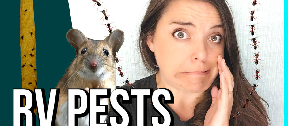 Preventing RV Pests: Mice, Flies & Ants