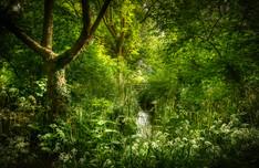 Wotton Brook in Armscroft Park
