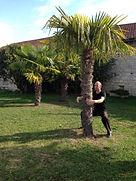 Qi gong-position de l'arbre