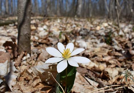 Flower at Garbry Sanctuary.jpg