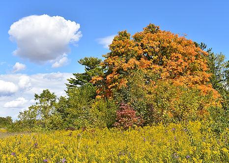 Garbry Big Woods Reserve.jpg