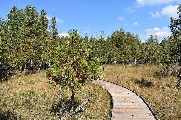 Cedar Bog Boardwalk.JPG