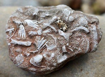 Good Fossil Picture.jpg