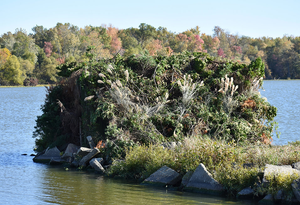 Bird Blind at Lake Loramie 1.JPG
