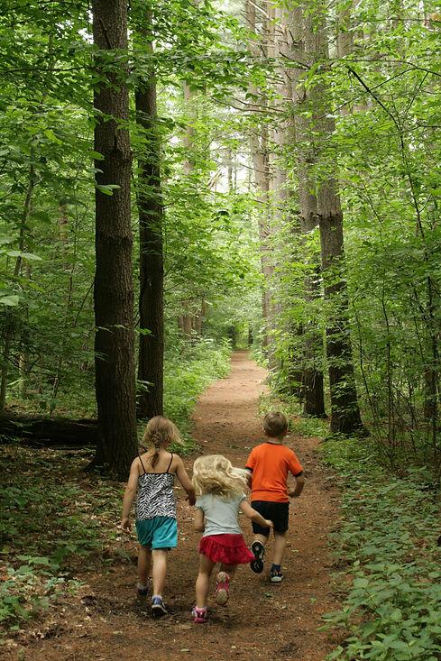 A Hike at Brukner.jpg