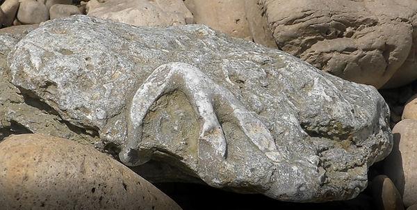 Fossil 133.jpg