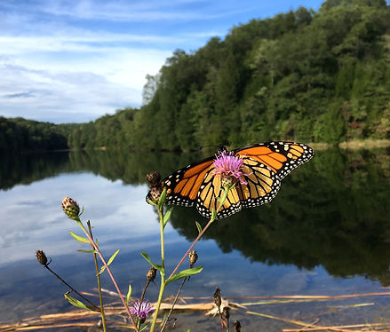 Butterfly at Rose Lake in Hocking Hills.