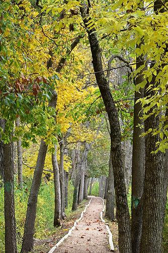 Roger Presley Trail Fall Tall.JPG