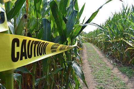 Lost Land Corn Maze Promo 3.jpg