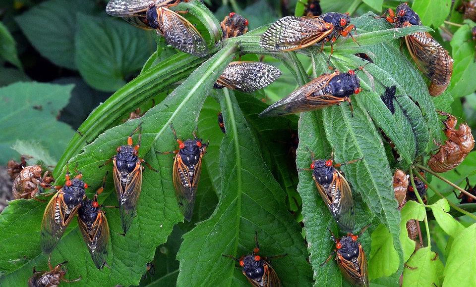 Bug 2.jpg