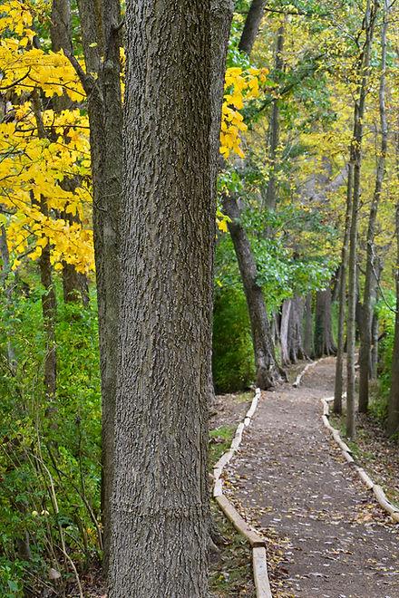 Roger Presley Trail Fall.JPG