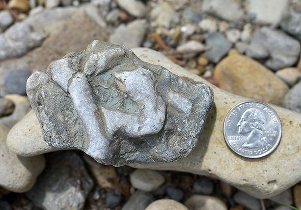 Fossil Next to Quarter.jpg