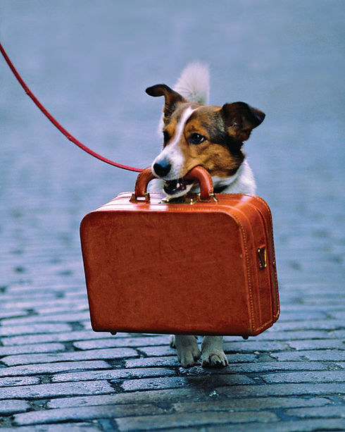 dog-with-suitcase-2.jpg