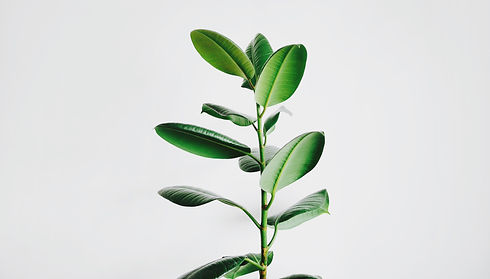 Single plant with leaves