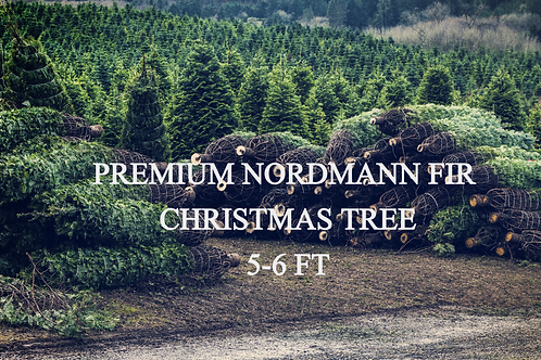Locally Grown Premium Nordmann Fir Christmas Trees - 5-6 Foot
