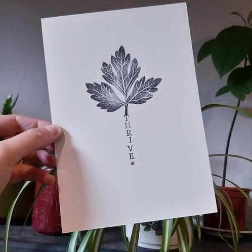 Cass Barron - Botanicals prints 'THRIVE'