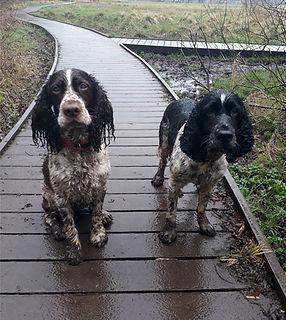 Mucky Pups