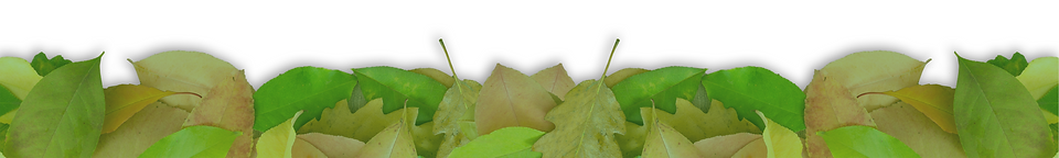 leaf footer1.png