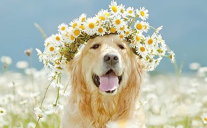 The best organic dog shampoo in United Kingdom