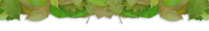 leaf footer2.png
