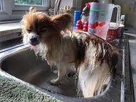 best organic dog shampoo in United Kingdom
