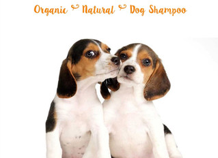 How We are Getting Addicted to              K9  Organics