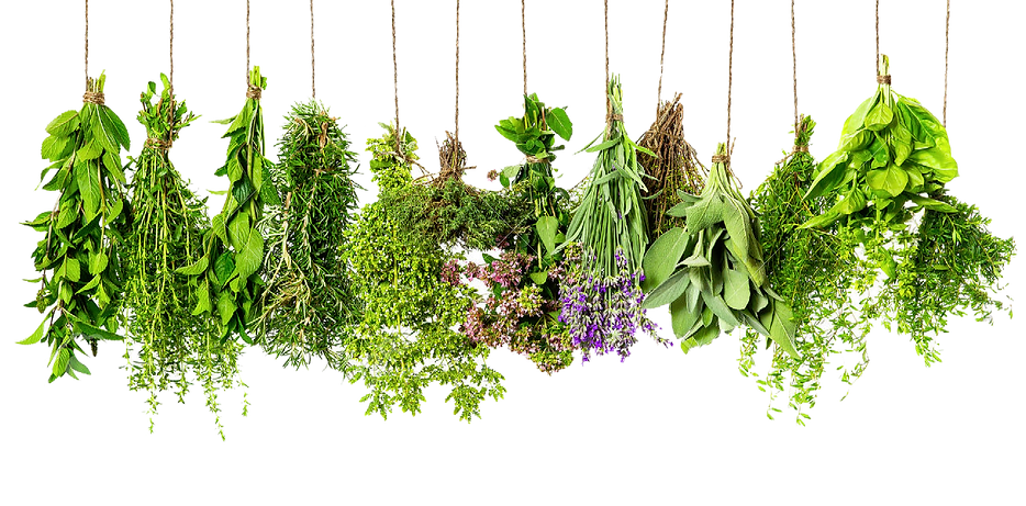 herbs-hd-png-herbs-png-hd-1300.png