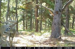 Texas Whitetail Hunting