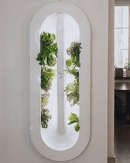 Hydroponic micro-farm, a sustianable interior biophilic design for better workplaces