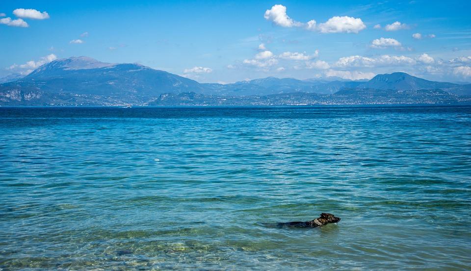 lake-garda-hond.jpg