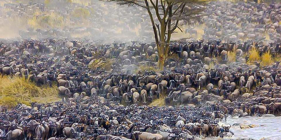 Masai Mara - The Mecca For Wildlife