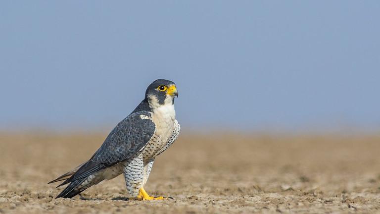 Birding at Little Rann of Kutch