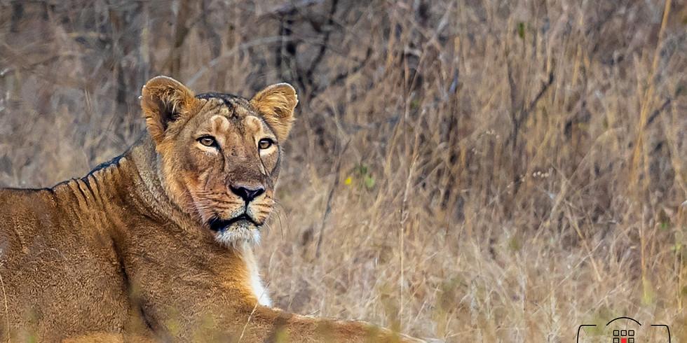 Safaris At Gir