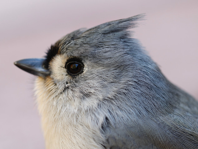 FeatheredFriend.jpg