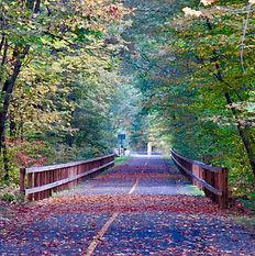 Footpath through the trees (1).jpg